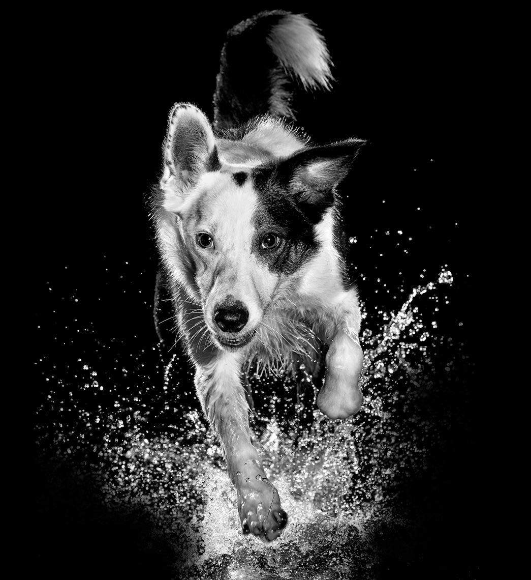 Advertising-Action-Animal-Photographer-Vancouver.jpg